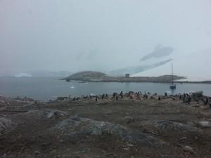 antarktis-pinguine-galerie-02