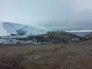 antarktis-pinguine-galerie-03