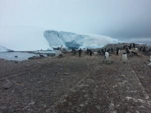 antarktis-pinguine-galerie-04
