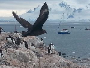 antarktis-pinguine-galerie-11