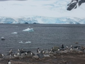 antarktis-pinguine-galerie-12