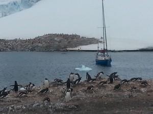 antarktis-pinguine-galerie-13