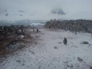 antarktis-pinguine-galerie-16