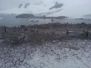 antarktis-pinguine-galerie-17