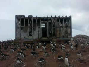 antarktis-pinguine-galerie-18