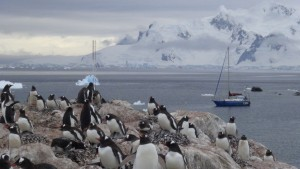 antarktis-pinguine-galerie-19