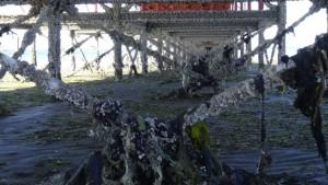 argentina_puerto_madryn-strandimpression-013